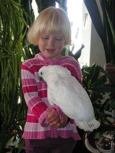 Handaufzucht: Weißhaubenkakadu